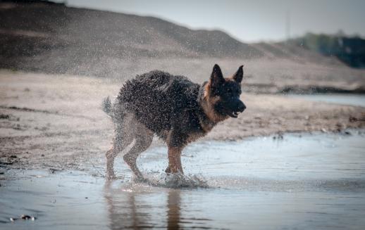 nasser hund, tierfotografie