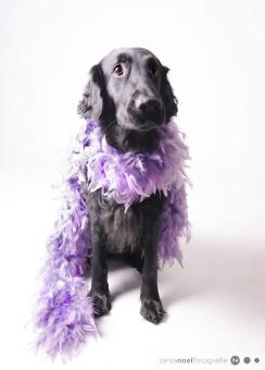 Hunde Fotografie - Labrador