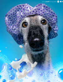Hunde Fotografie