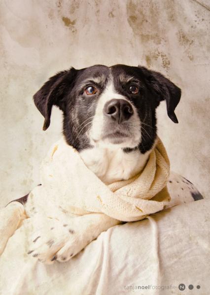Hunde Fotografie - Mix Hündin Mia