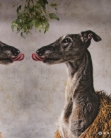 Kissing King - Galgo