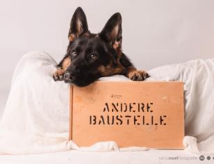 Schäferhunde Foto