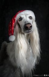Tierfotografie Weihnachten