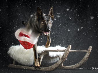 Weihnachts Shooting