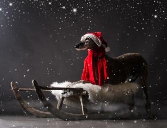 wh-weihnacht