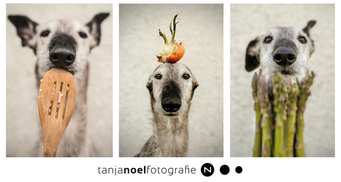 HUNDE FOTOGRAF, Hochzeitsfotograf, TIERFOTOGRAFIE, HUNDE SHOOTING, Tanja Noel Fotografie