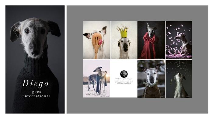 Hochzeitsfotograf, TIERFOTOGRAFIE, HUNDE SHOOTING, Tanja Noel Fotografie