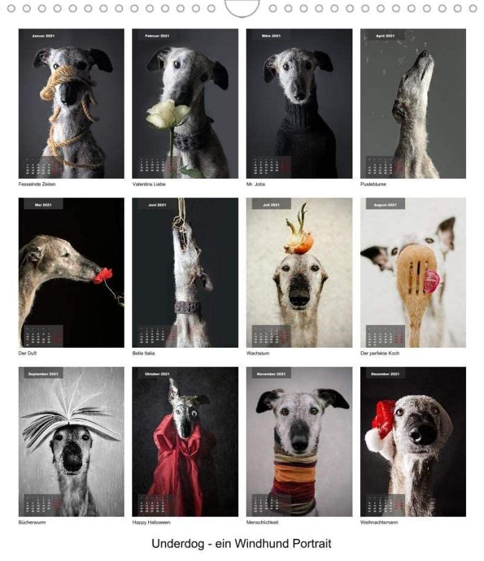 Hundefotografie, Tier Shooting, Hunde Fotograf, Wels. Linz, Wien